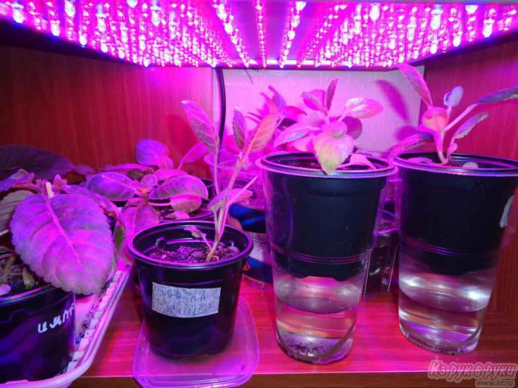 Подсветка для растений своими руками 35