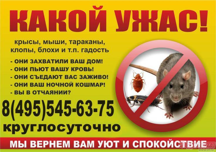 Служба по борьбе с тараканами