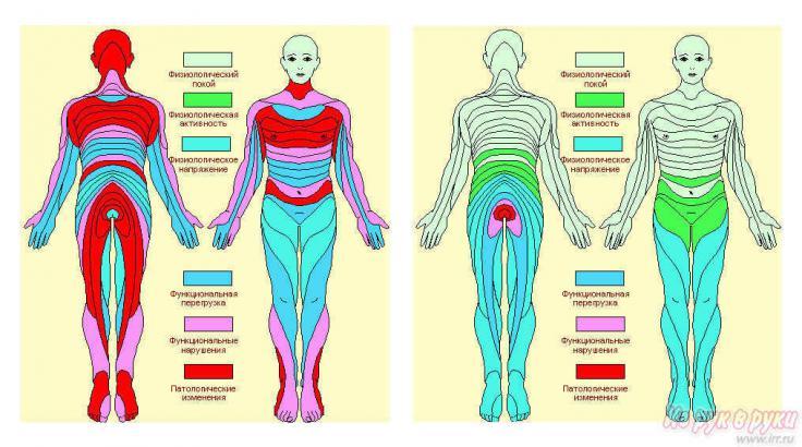 Как сделать диагностику всего организма